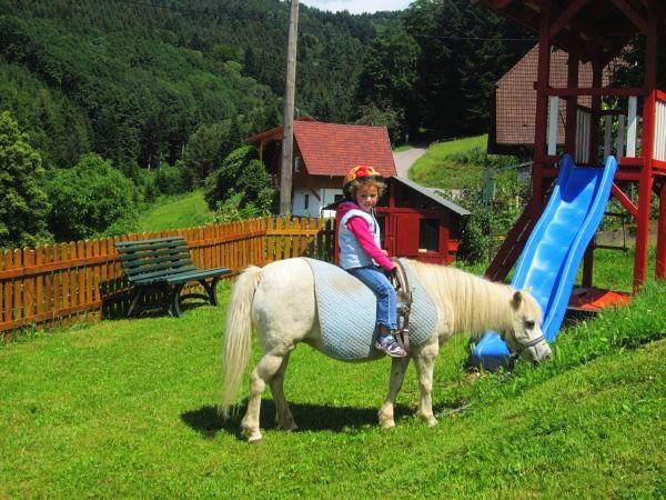 Fewo Schwarzwald: Kinder können bei uns Pony-Reiten
