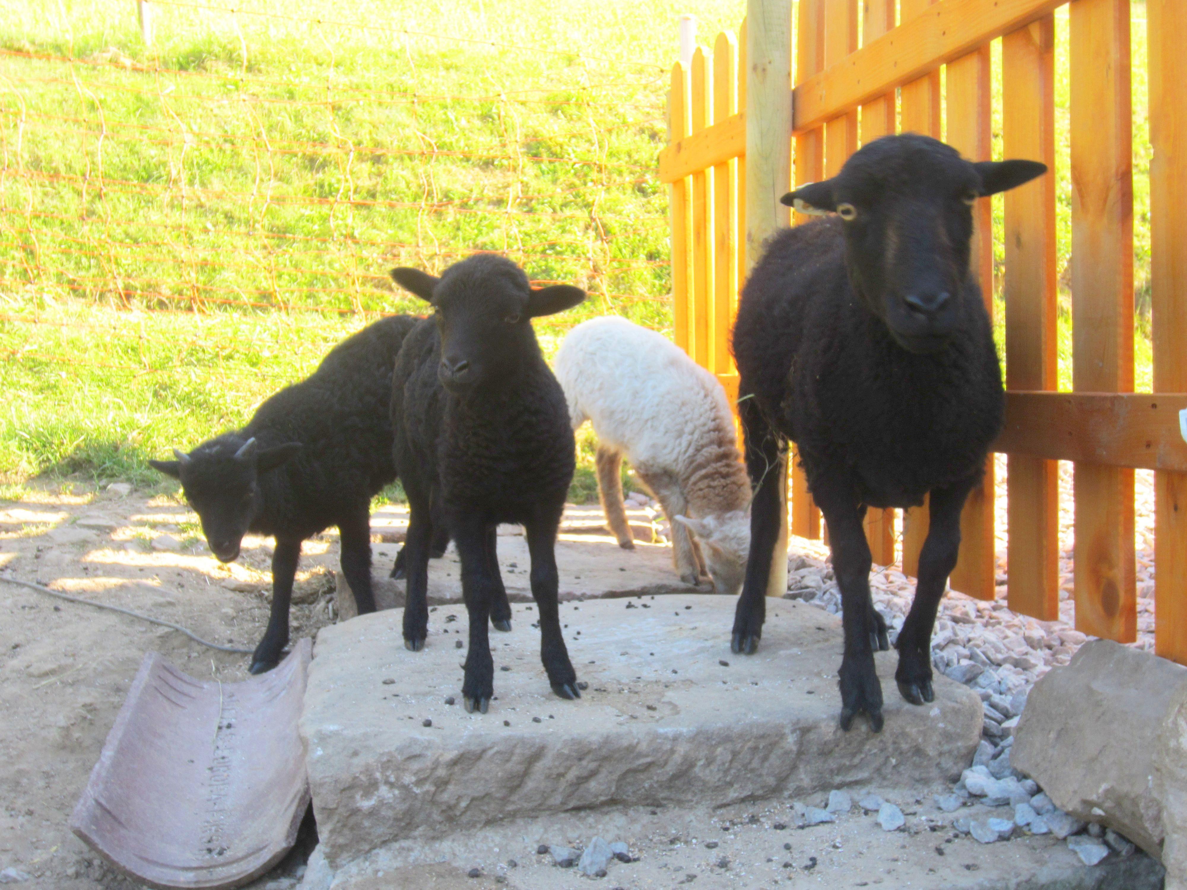 Ferien auf dem Bauernhof, Steicheltiere
