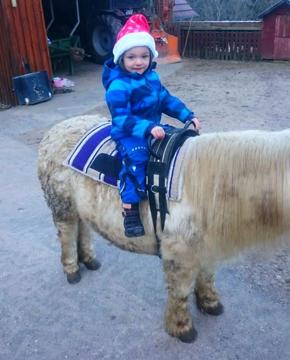 Adventszeit auf dem Waelderhof Pony Maike