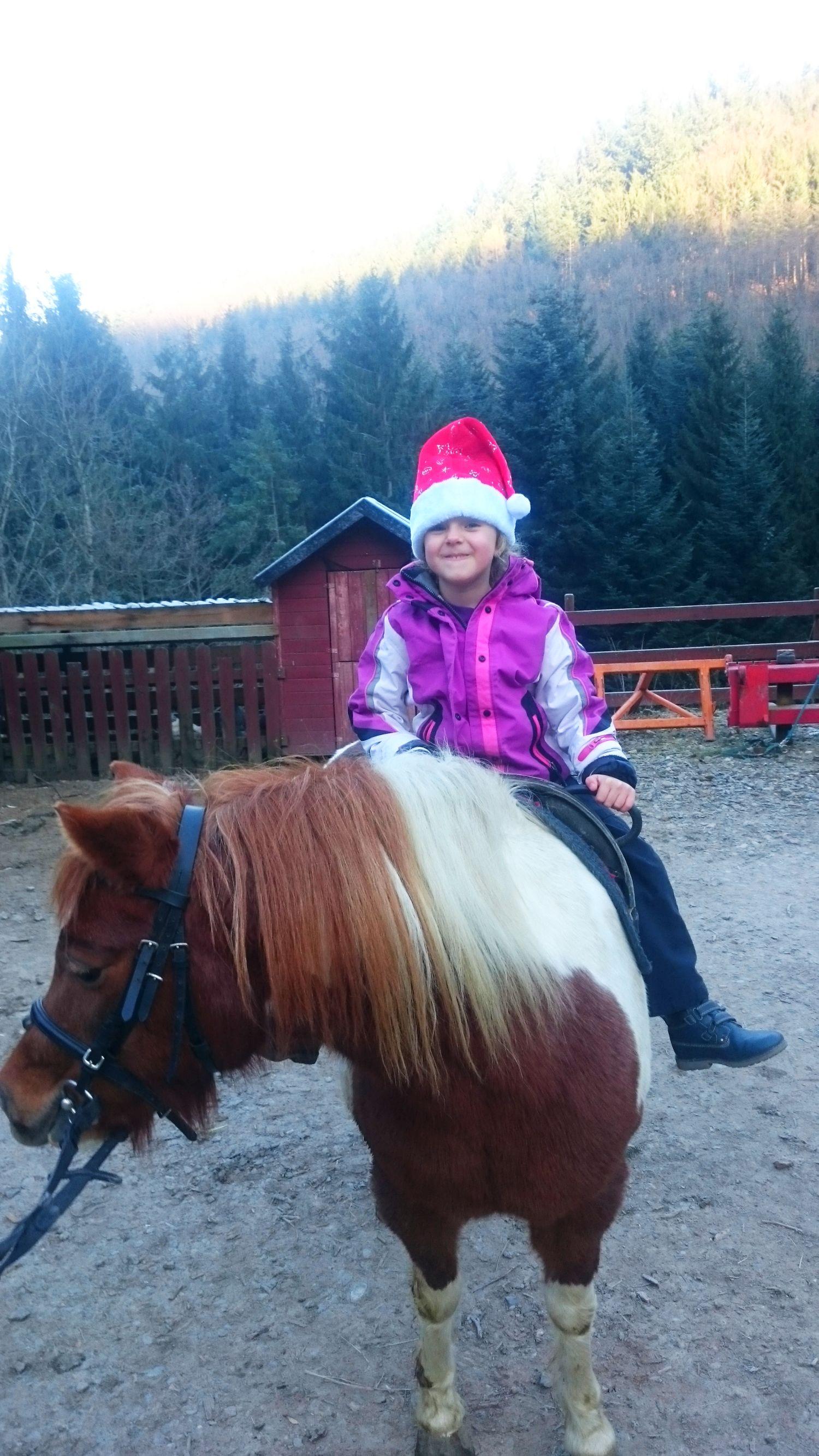 Adventszeit auf dem Waelderhof Pony Stella