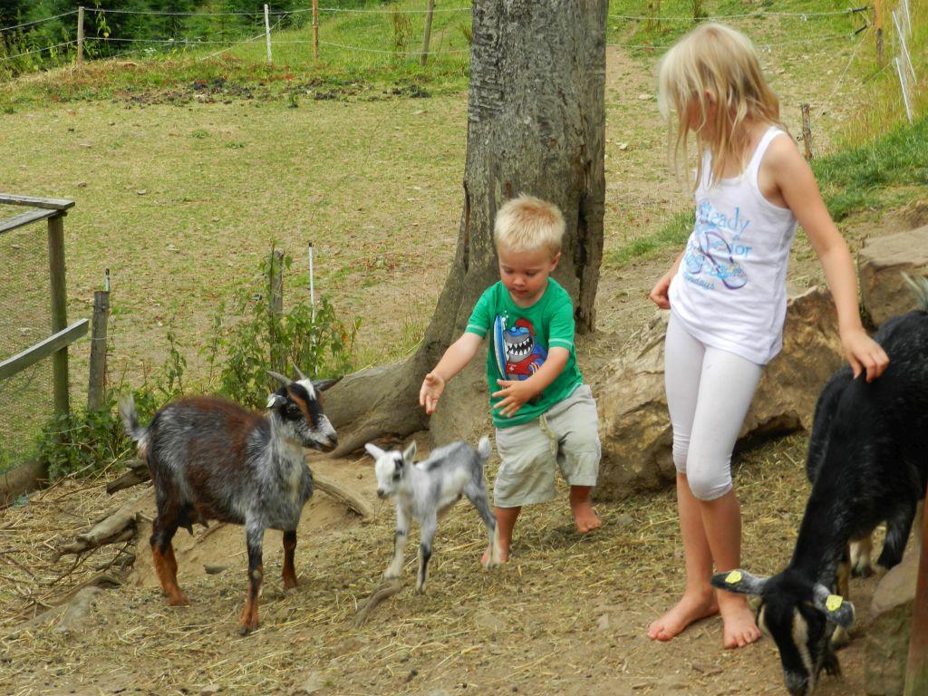 Bauernhofurlaub Schwarzwald Ferienwohnungen Streicheltiere