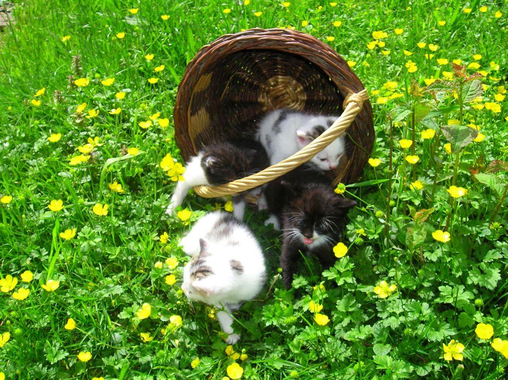 Ferienwohnungen Schwarzwald Streicheltiere Katzen