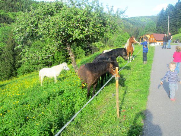 Kinder können bei uns Ponyreiten Wir haben 4 Shetland-Pony's