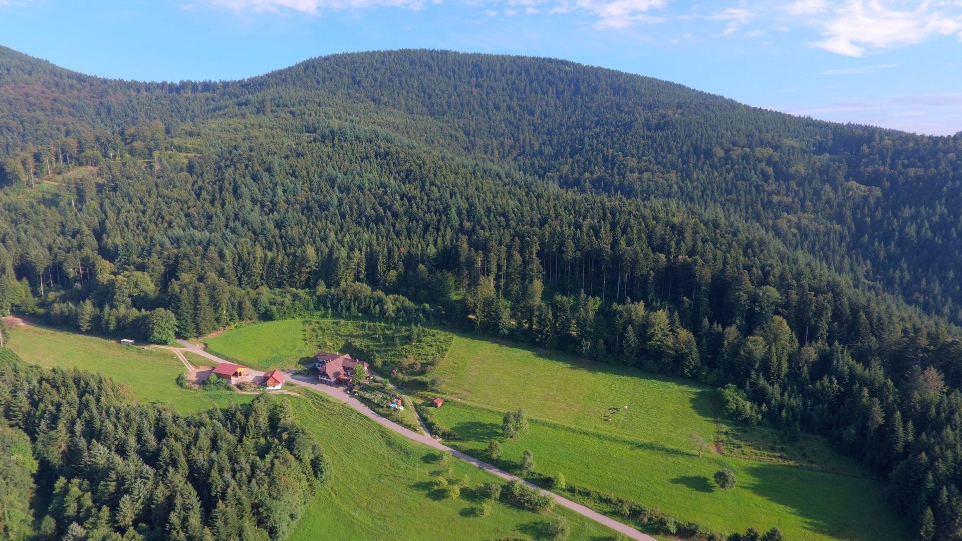 Der Wälderhof im Schwarzwald, Ferienwohnungen Gästezimmer Appartement