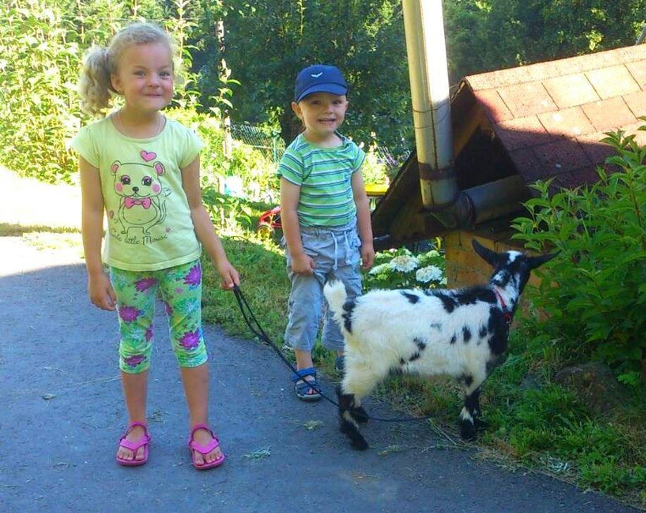 Spaziergang mit Ziege Heidi