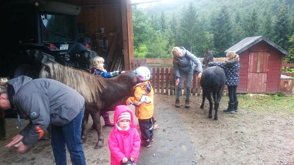 Geführtes Pony-Reiten für Eltern und Kinder