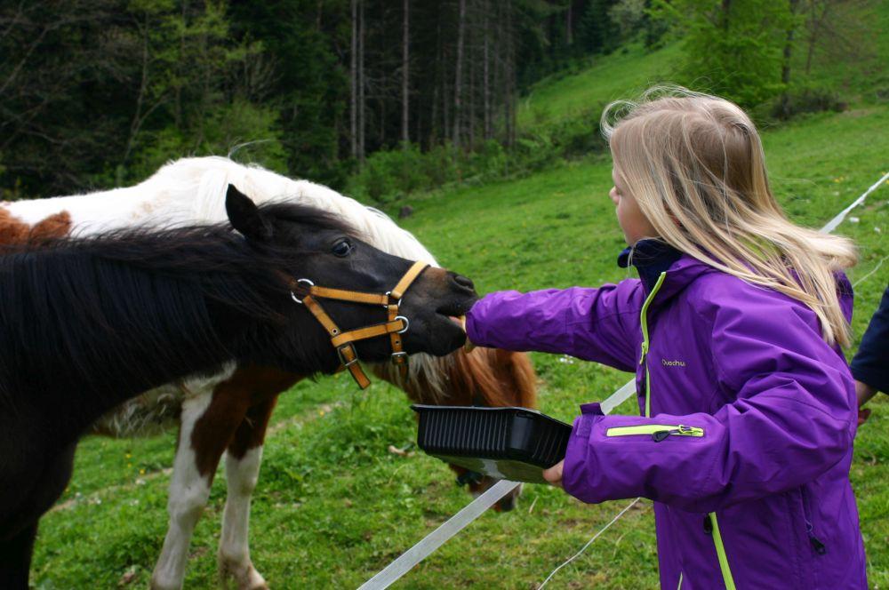 Wälderhof Pony's  Streicheltiere