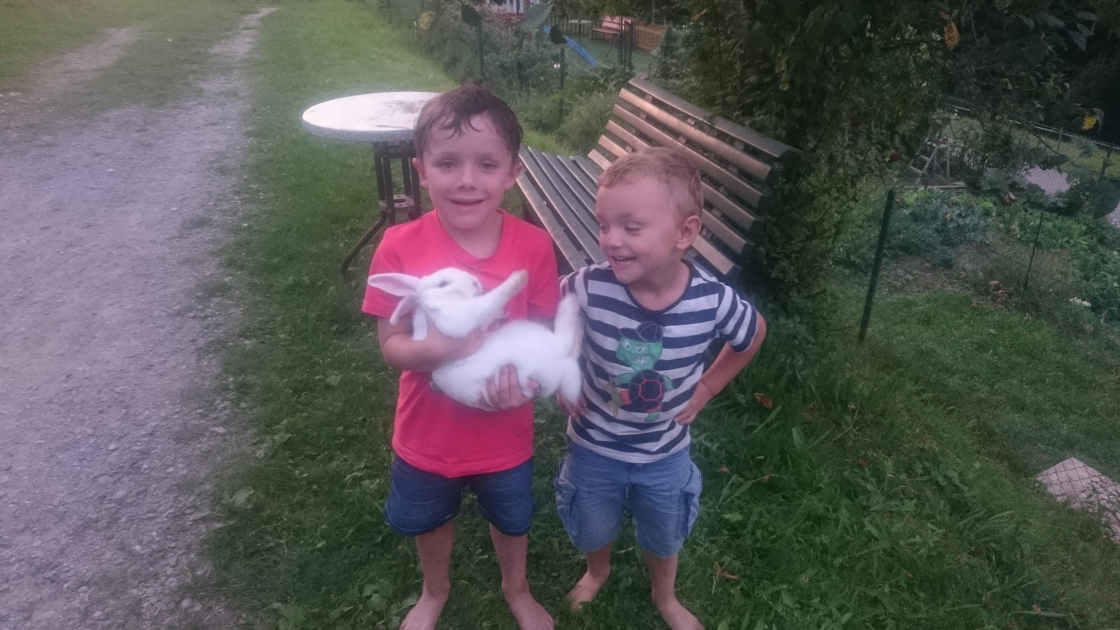 Streicheltiere Kaninchen